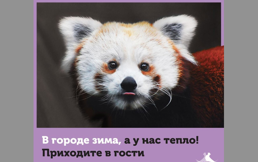 https://www.facebook.com/MoscowZoo/?fref=ts.