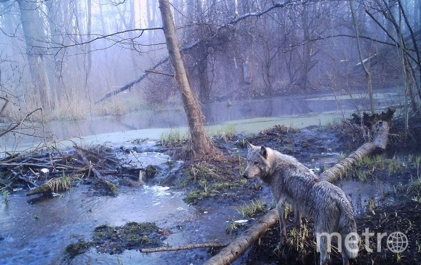 Фото предоставил Сергей Гащак (Чернобыльский центр).