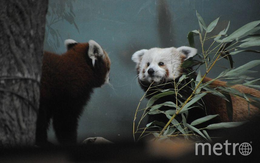 Предоставлено пресс-службой Московского зоопарка.
