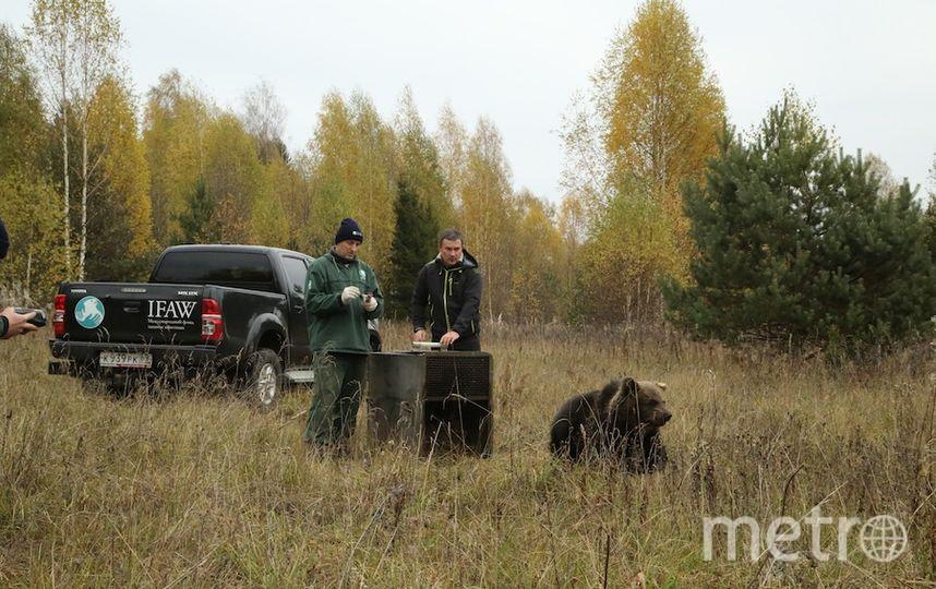 Департамент природопользования и охраны окружающей среды Москвы.