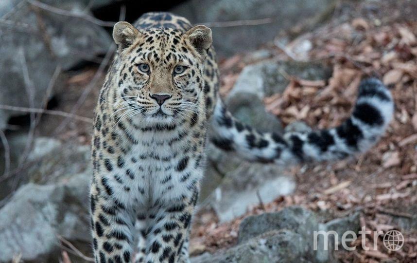 http://leopard-land.ru/news/3440.