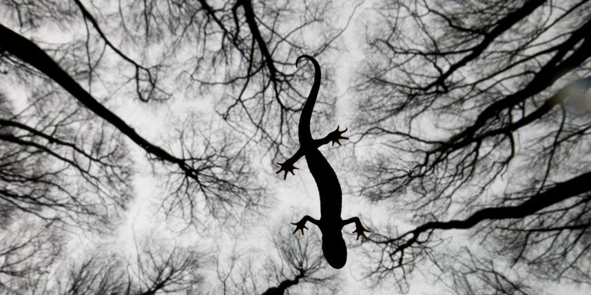 Edwin Giesbers/Wildlife Photographer of the Year 2015.