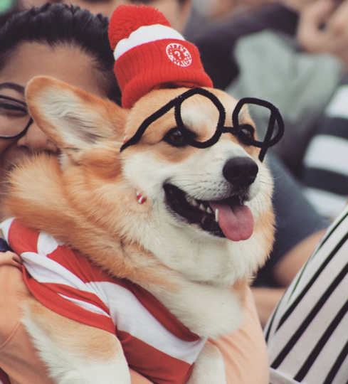 https://instagram.com/explore/tags/corgicon/.