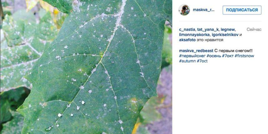 https://instagram.com/p/8iLNCBPoAZ/?taken-by=maskva_redbeast.