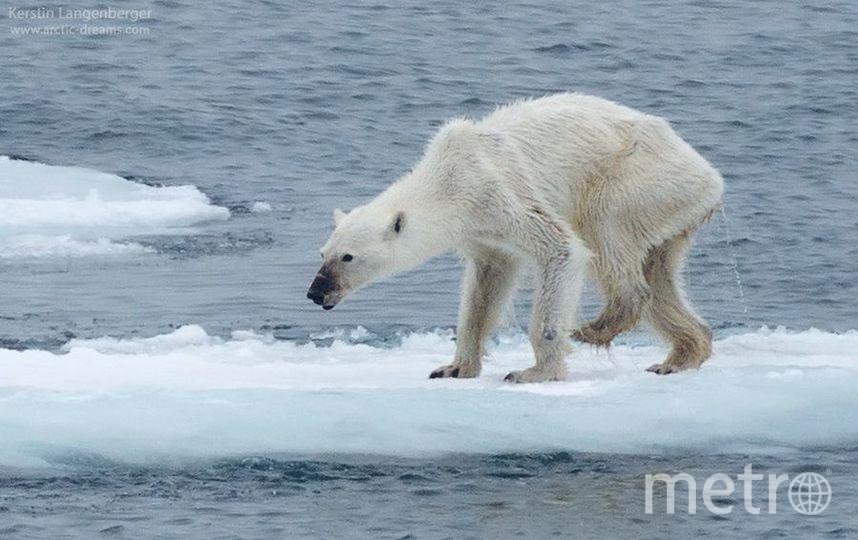 http://www.arctic-dreams.com/.