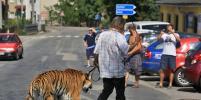 Цирковой тренер прогулялся с тигром по чешскому городу Летовице