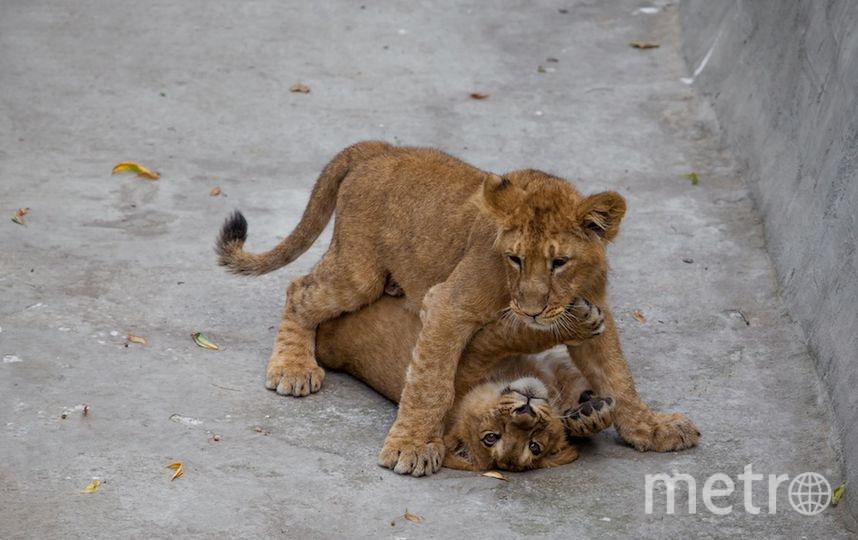 Фото предоставлено пресс-службой Московского зоопарка.