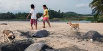 Черепахи вылезли на побережье Мексики
