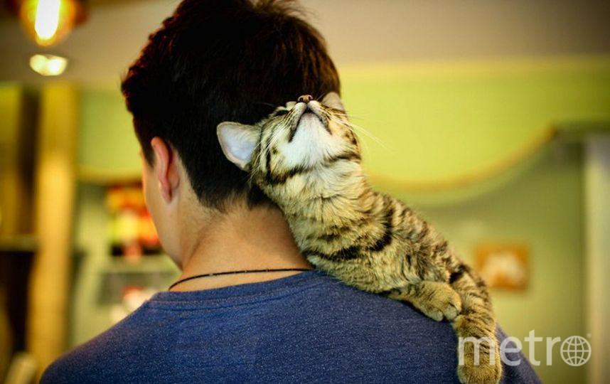 "Фото предоставлено котокафе ""Котики и люди""."