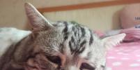 Самая печальная кошка в мире стала звездой Instagram