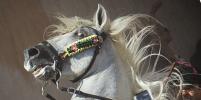 Толпа испанцев встречала встающих на дыбы лошадей во время фестиваля Сан-Хуан