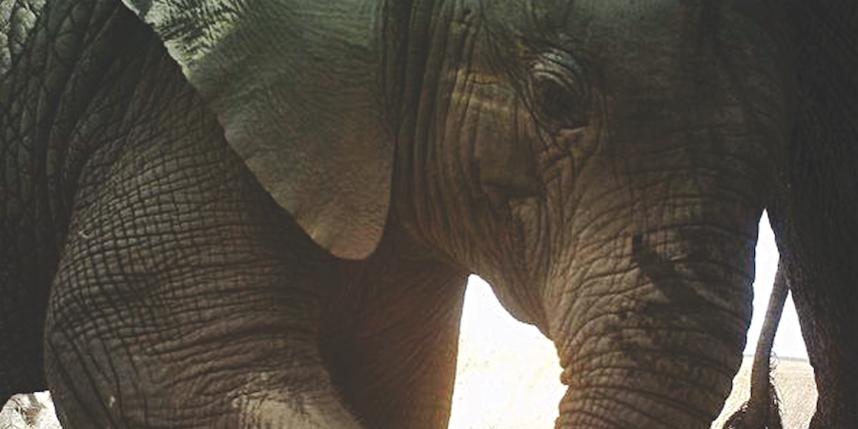All images: Snapshot Serengeti/Creative Commons.