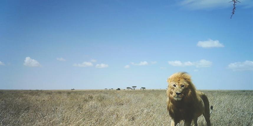 Snapshot Serengeti/Creative Commons.