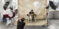 Во Франции прошёл 137 собачий чемпионат
