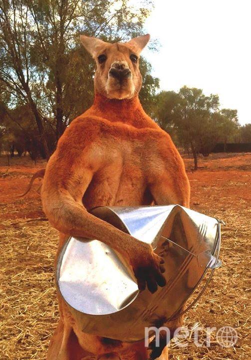 Все фото: www.facebook.com/kangaroosanctuary.