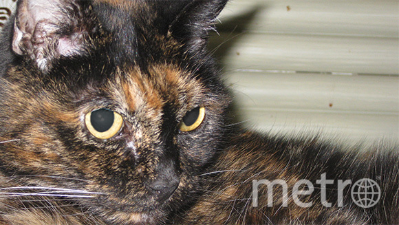http://www.guinnessworldrecords.com/news/2015/6/tiffany-two-the-worlds-oldest-cat-living-passes-away-380435.