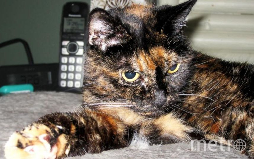 http://www.guinnessworldrecords.com/news/2015/6/tiffany-two-the-worlds-oldest-cat-living-passes-away.