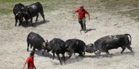 В Швейцарии состоялся традиционный бой коров