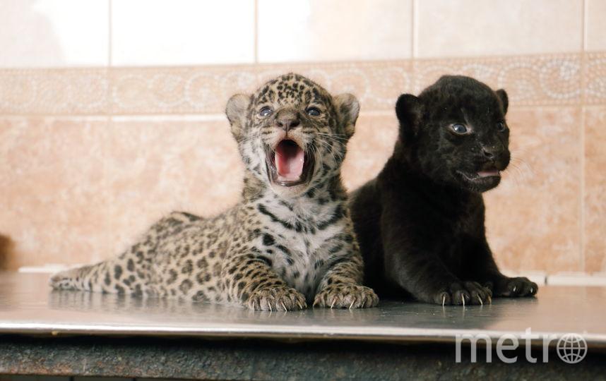 все - предоставлены Ленинградским зоопарком.