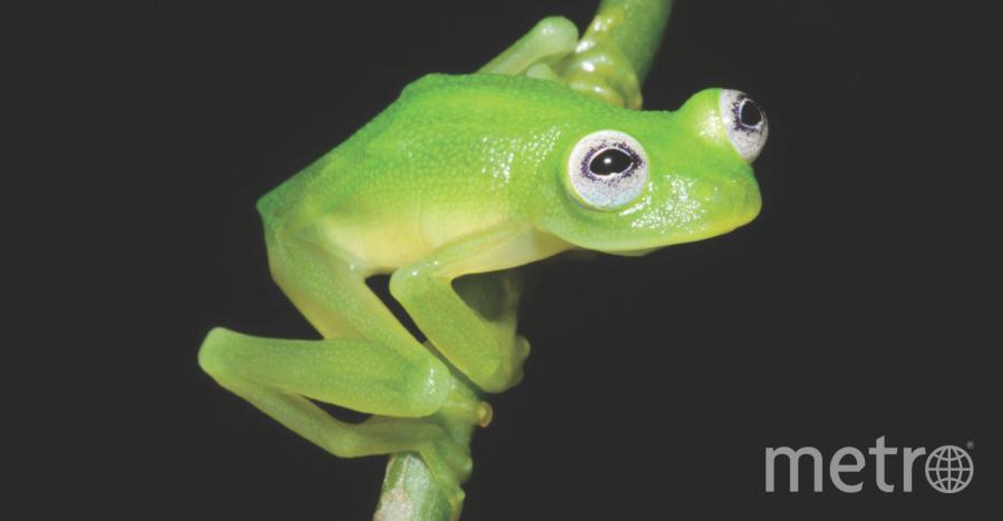 Центр исследования земноводных в Коста-Рике (CRARC) .