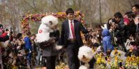 Китайские собаководы провели массовую свадебную церемонию для питомцев