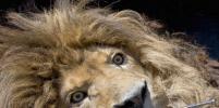 Во Франции из зоопарка были эвакуированы более 160 животных