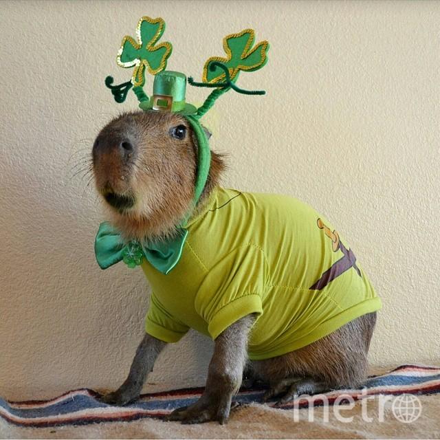 @joejoe_the_capybara.