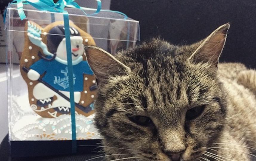 было еще кошка матроска фото крид
