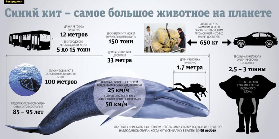 Технике квиллинг, картинки 19 февраля всемирный день млекопитающих