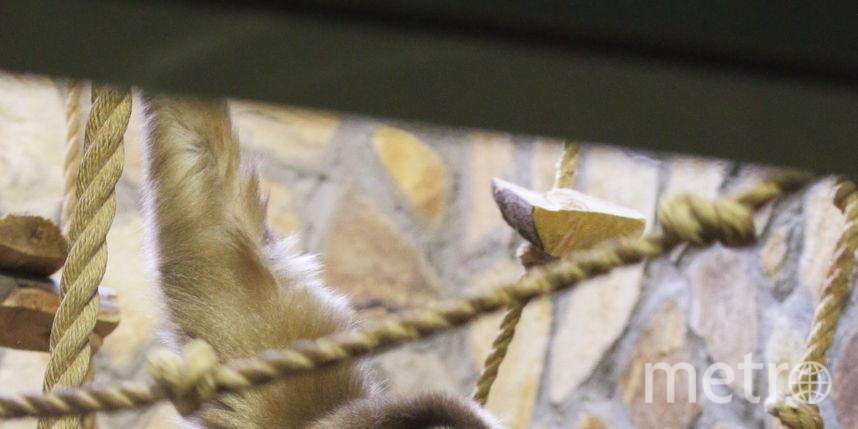 Фото: предоставлено Ленинградским зоопарком / Фотограф - М.А. Солдатенков.
