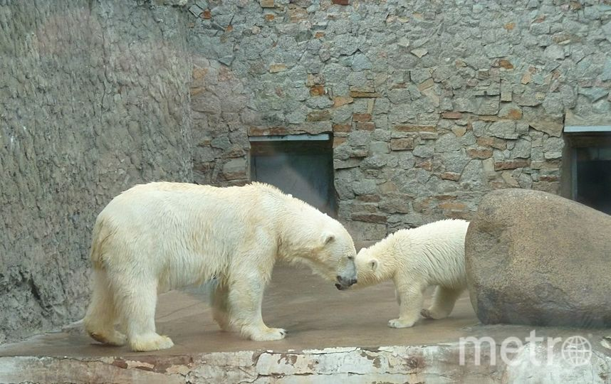 Ленинградский зоопарк / vk.com/spbzoopark.