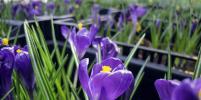 В Москве начали будить цветы