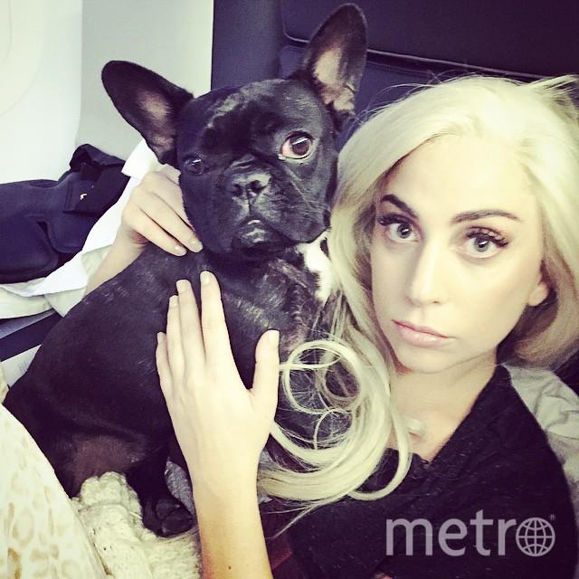 скриншот страницы Lady Gaga в Instagram.