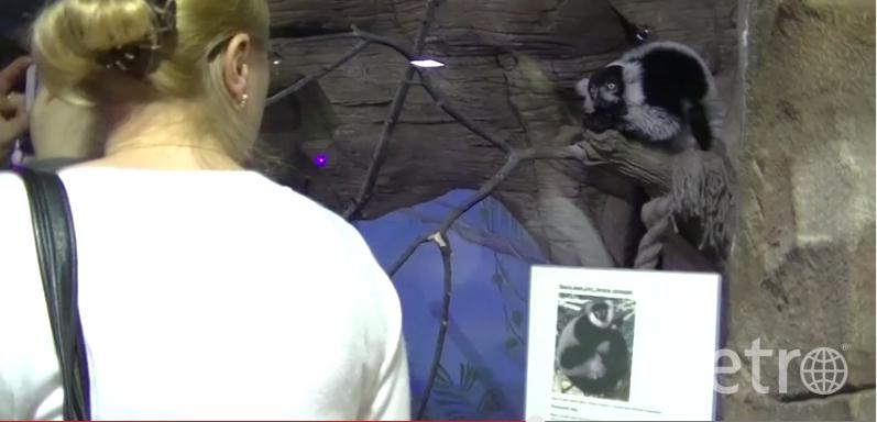 """скриншот с видео """"Виты""""."""