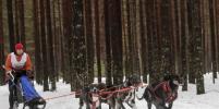 В Ленобласти прошёл Открытый чемпионат ездового спорта России