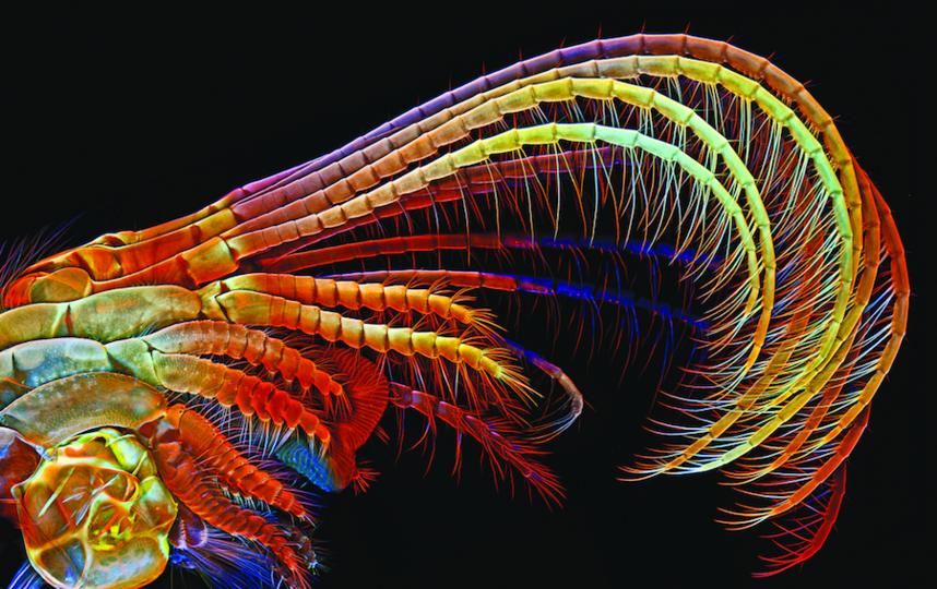 Igor Siwanowicz/2014 Olympus BioScapes Digital Imaging Competition.