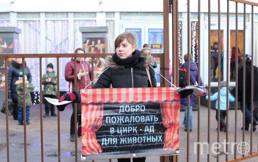 """фото предоставлено Центром защиты прав животных """"Вита""""."""