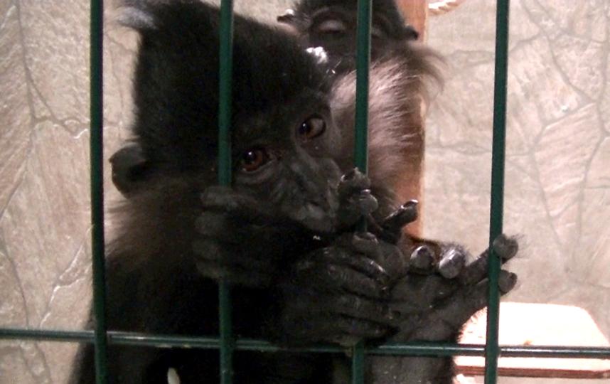 предоставил Центр защиты прав животных «Вита».