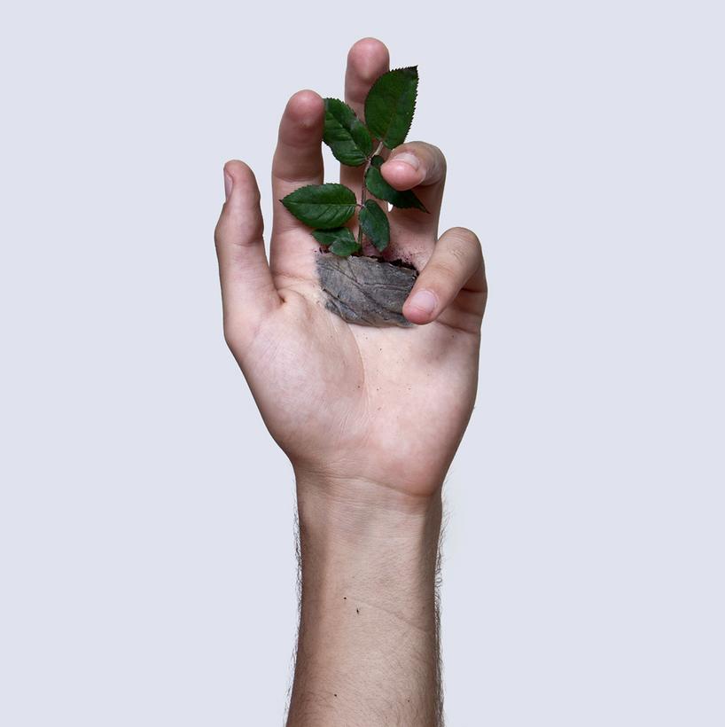 Испанец проделал отверстие в руке, чтобы вырастить в ней розу. Новости - Мировые новости. Metro