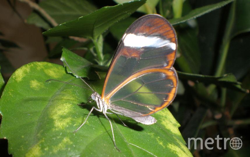 """все - предоставлены Музеем живых бабочек """"Тропический рай""""."""