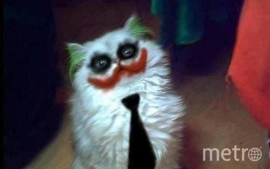 Catster.com.