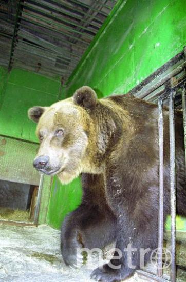 пресс-служба Ленинградского зоопарка.