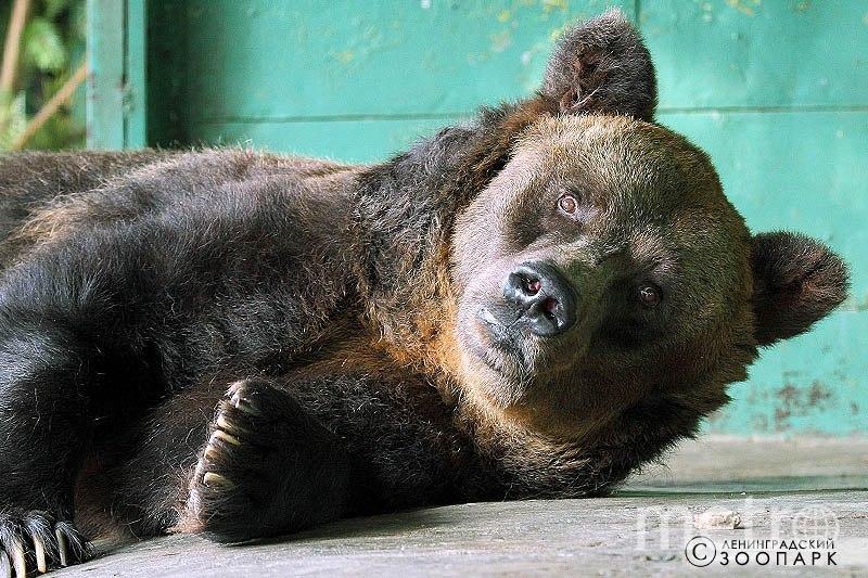 все - Ленинградский зоопарк.