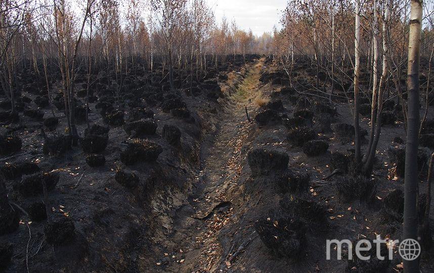 Мария Васильева/ Greenpeace.