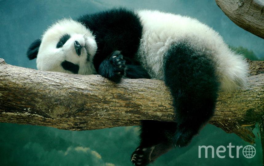 Все фото – WWF.