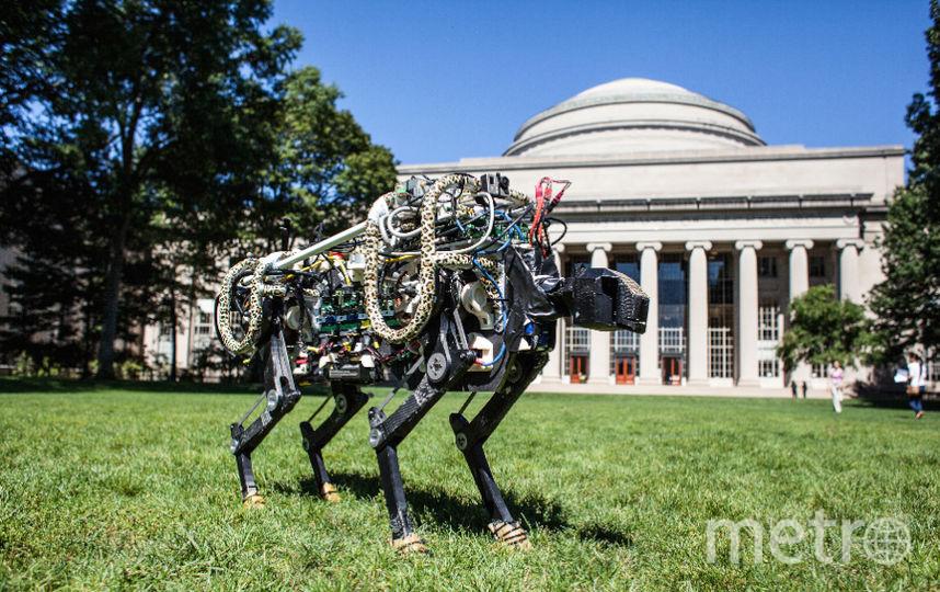 Все фото – Jose-Luis Olivares/MIT.
