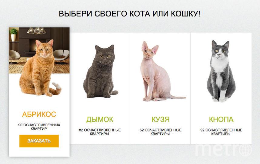 Kotoservice.ru.