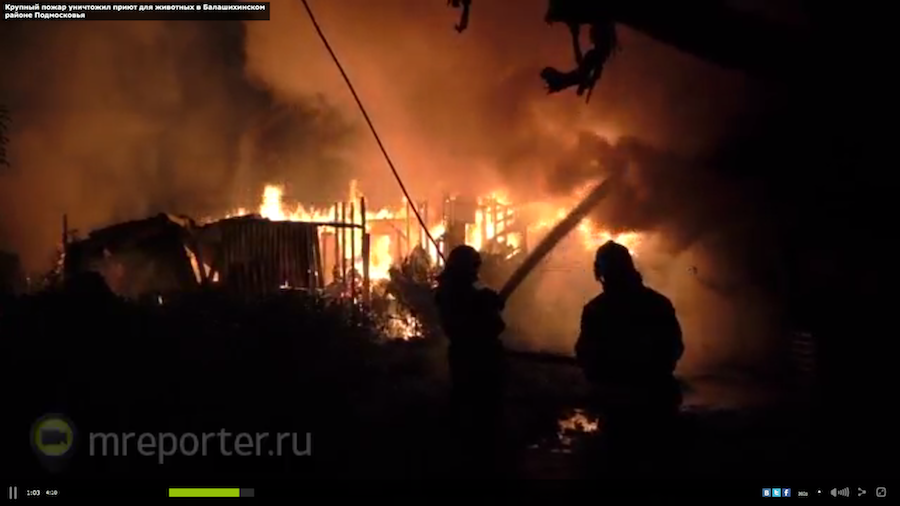 "Скриншот с видео ""Мобильного репортёра""."