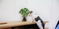 Дизайнер создал стол, на котором коту будет удобно