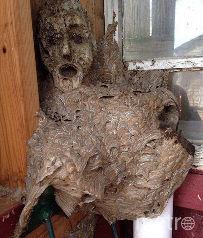 фото гнездо шершня